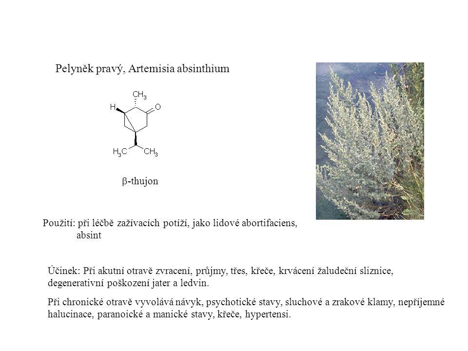 Pelyněk pravý, Artemisia absinthium
