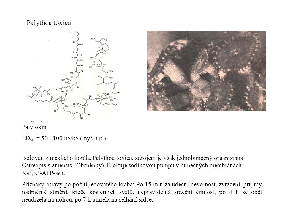 Palythoa toxica Palytoxin LD50 = 50 - 100 ng/kg (myš, i.p.)