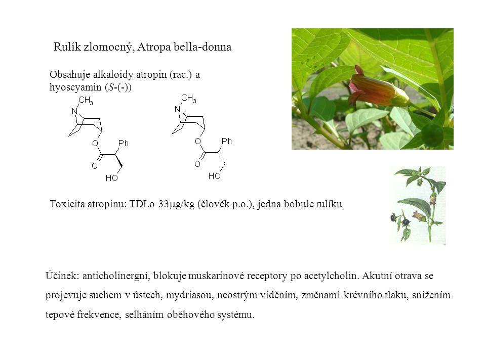Rulík zlomocný, Atropa bella-donna