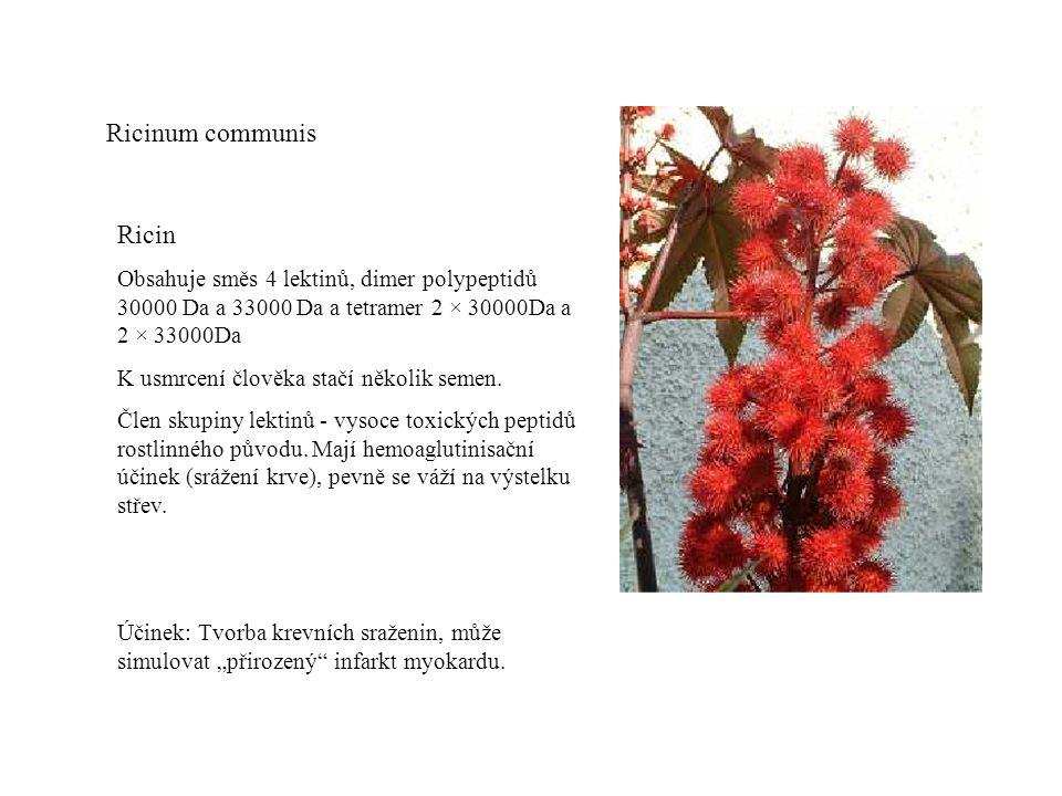 Ricinum communis Ricin