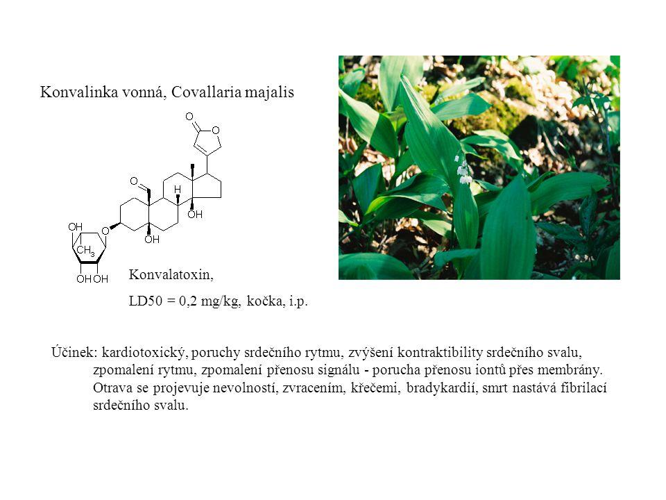 Konvalinka vonná, Covallaria majalis