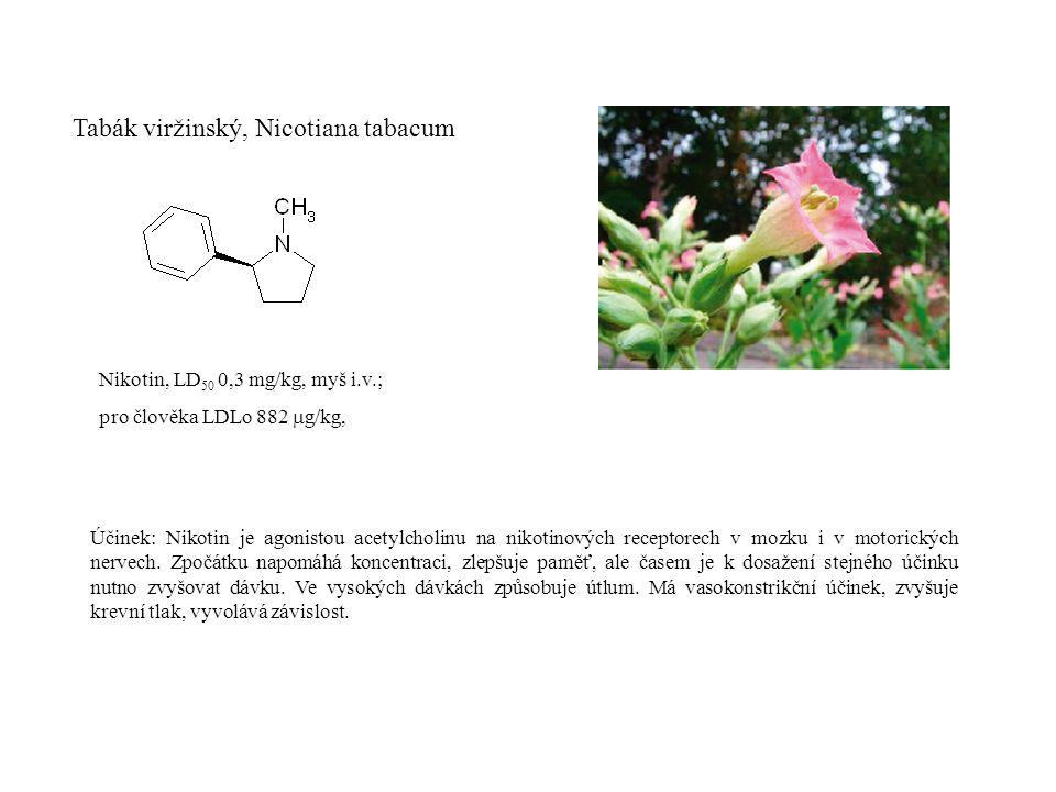 Tabák viržinský, Nicotiana tabacum