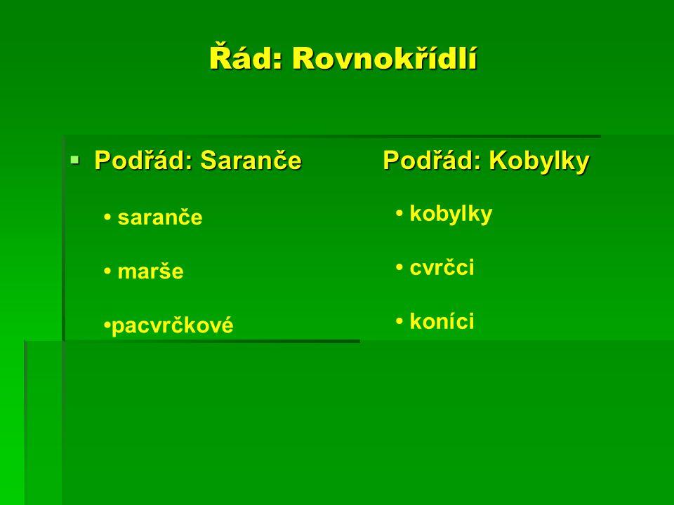 Řád: Rovnokřídlí Podřád: Saranče Podřád: Kobylky • kobylky • saranče