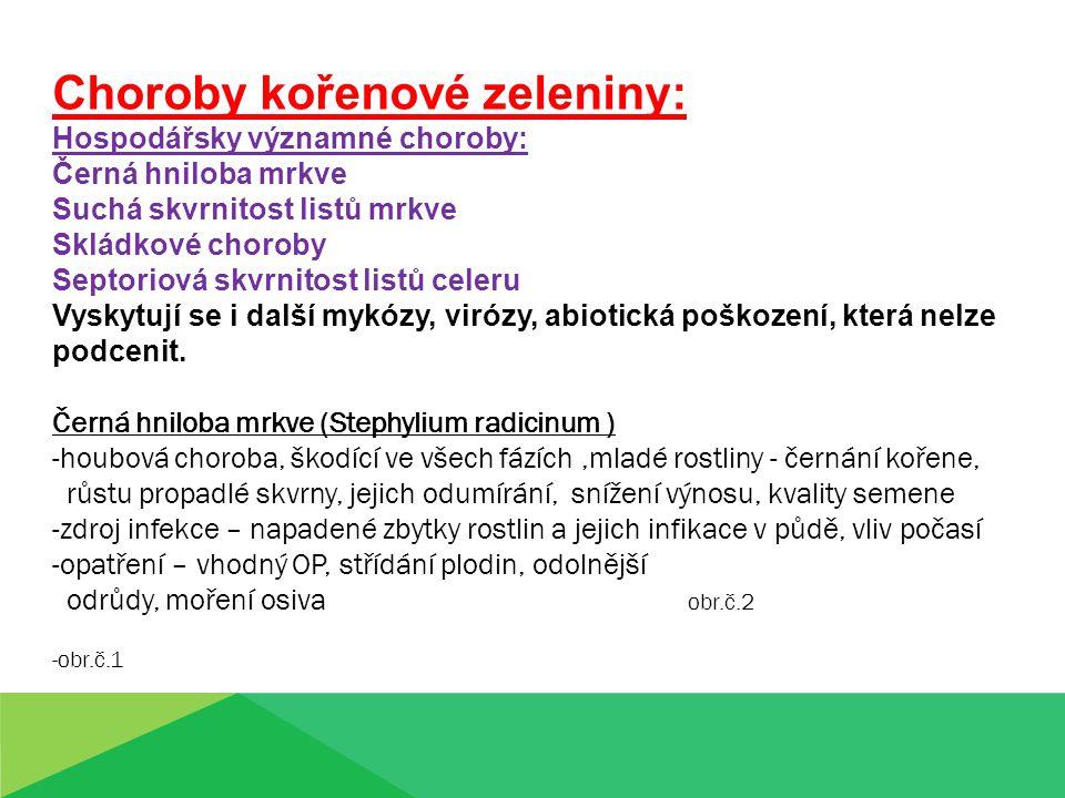 Choroby kořenové zeleniny: