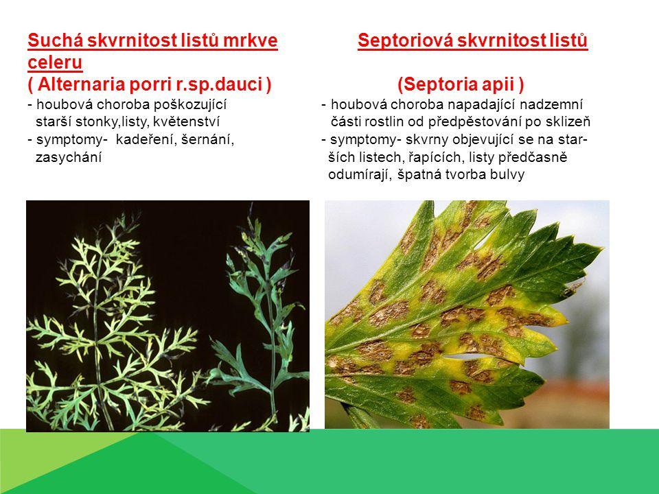 Suchá skvrnitost listů mrkve Septoriová skvrnitost listů celeru