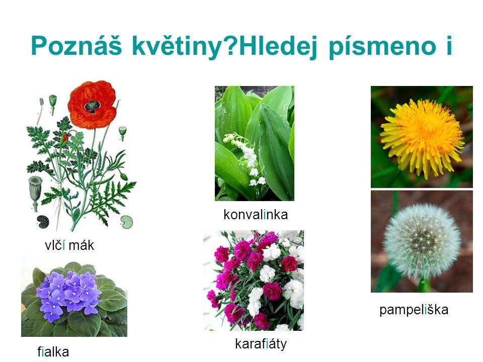 Poznáš květiny Hledej písmeno i