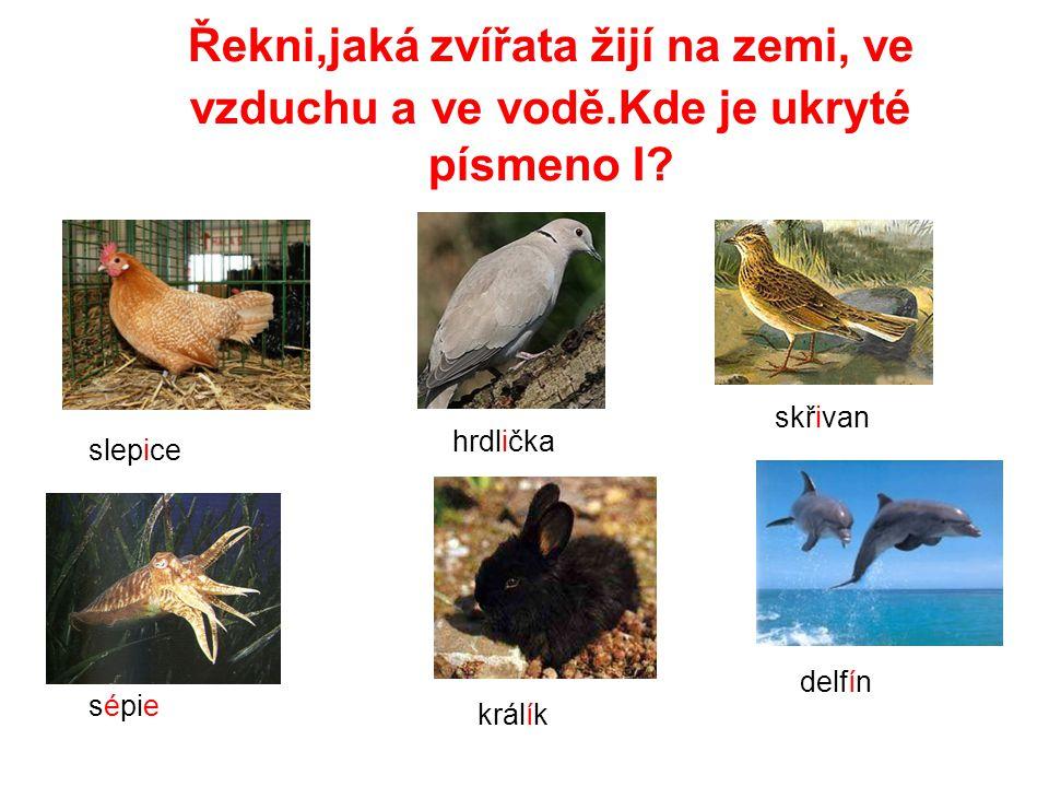 Řekni,jaká zvířata žijí na zemi, ve vzduchu a ve vodě