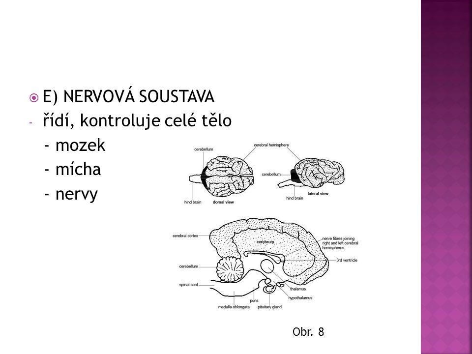 řídí, kontroluje celé tělo - mozek - mícha - nervy