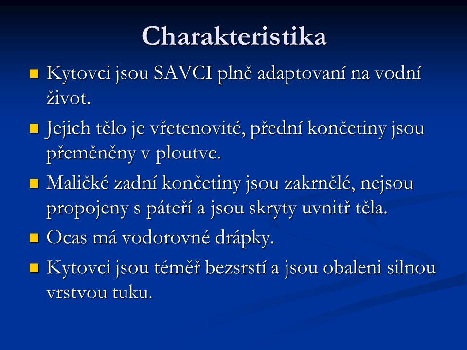 Charakteristika Kytovci jsou SAVCI plně adaptovaní na vodní život.