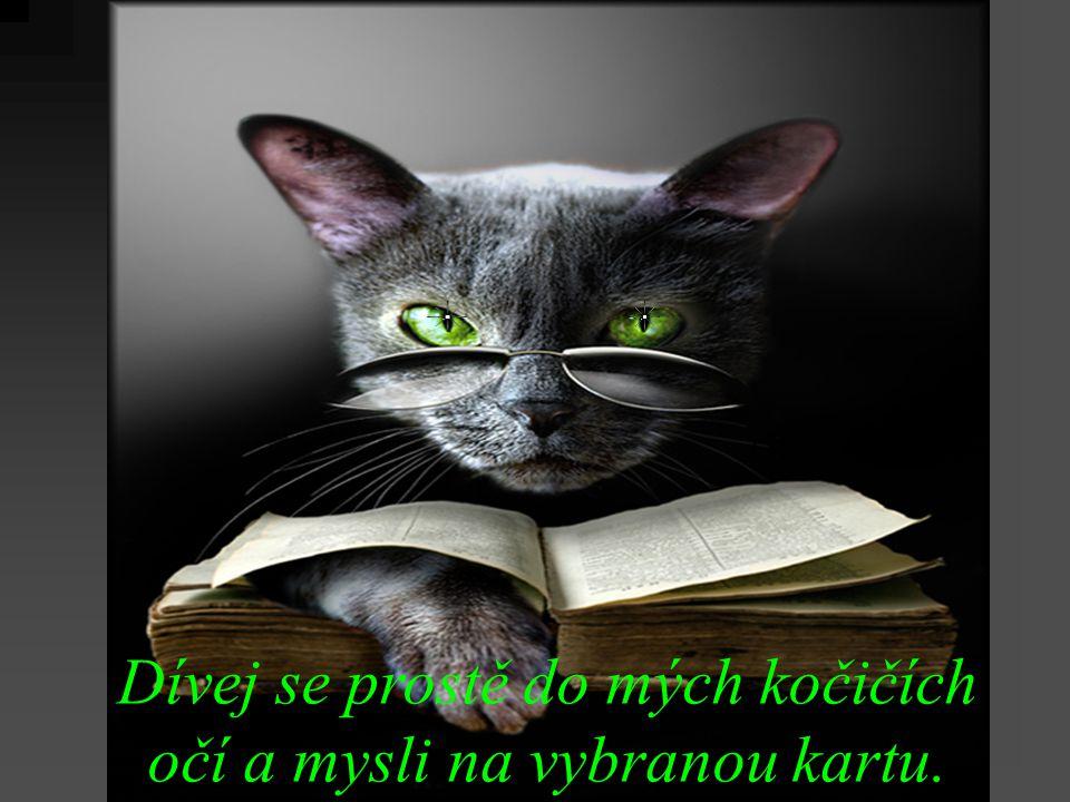 Dívej se prostě do mých kočičích očí a mysli na vybranou kartu.