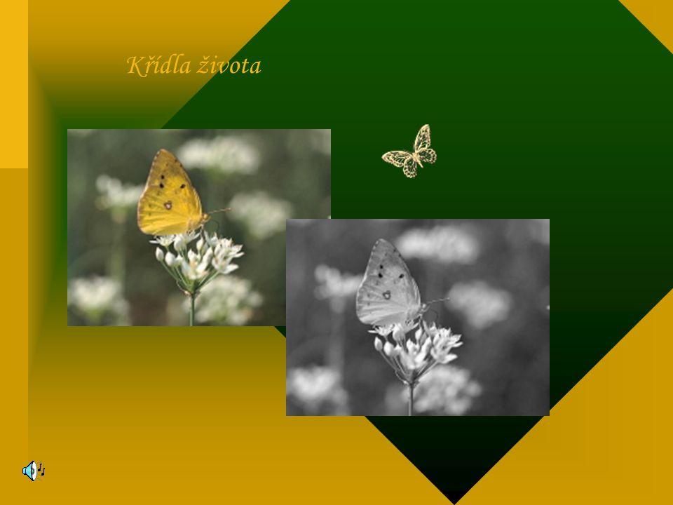 Křídla života