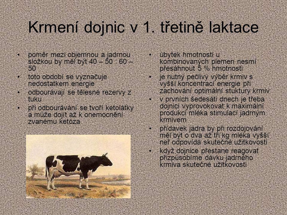 Krmení dojnic v 1. třetině laktace
