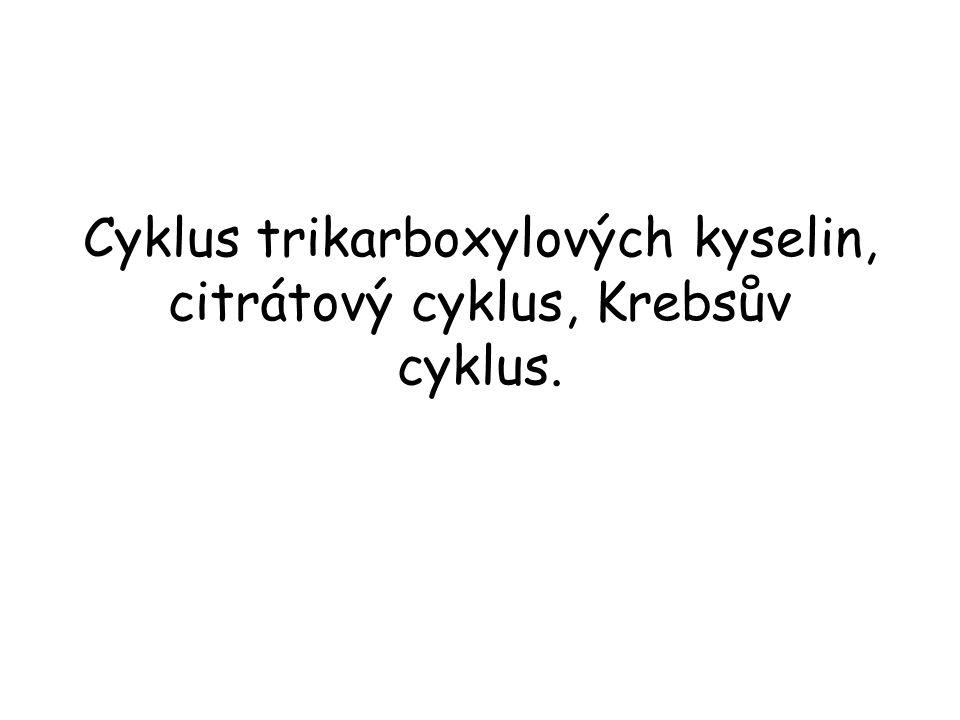 Cyklus trikarboxylových kyselin, citrátový cyklus, Krebsův cyklus.