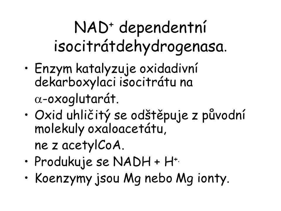 NAD+ dependentní isocitrátdehydrogenasa.