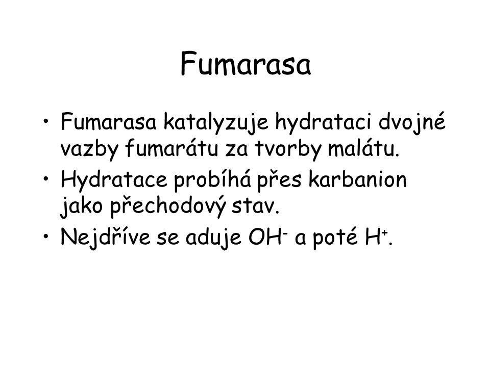 Fumarasa Fumarasa katalyzuje hydrataci dvojné vazby fumarátu za tvorby malátu. Hydratace probíhá přes karbanion jako přechodový stav.