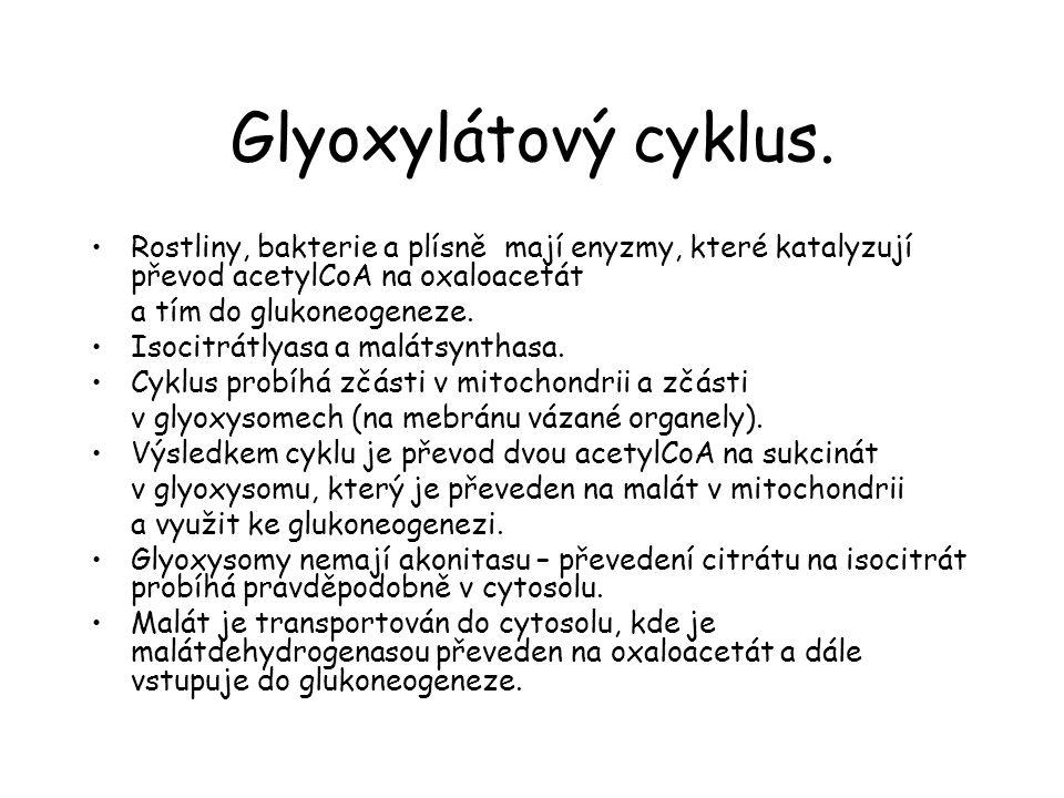 Glyoxylátový cyklus. Rostliny, bakterie a plísně mají enyzmy, které katalyzují převod acetylCoA na oxaloacetát.