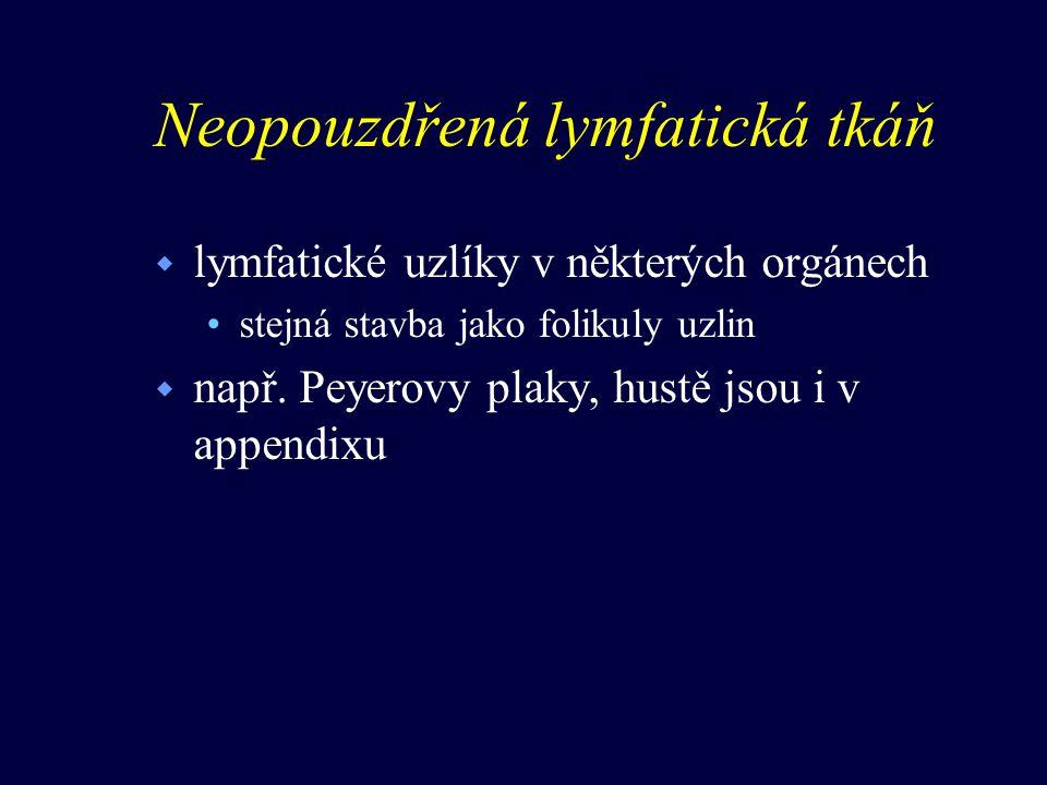 Neopouzdřená lymfatická tkáň