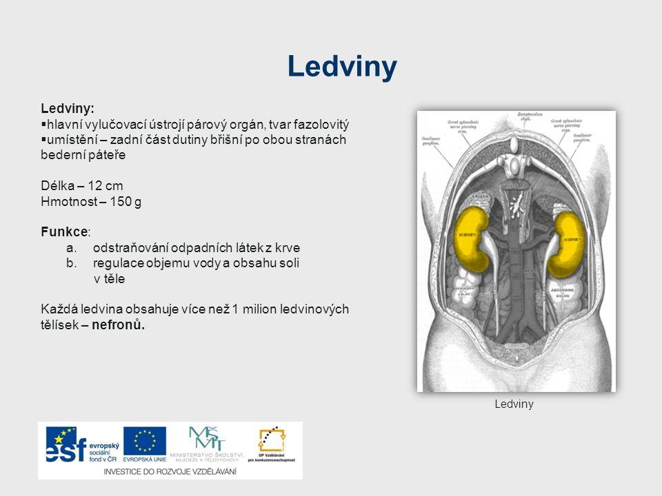 Ledviny Ledviny: hlavní vylučovací ústrojí párový orgán, tvar fazolovitý. umístění – zadní část dutiny břišní po obou stranách bederní páteře.