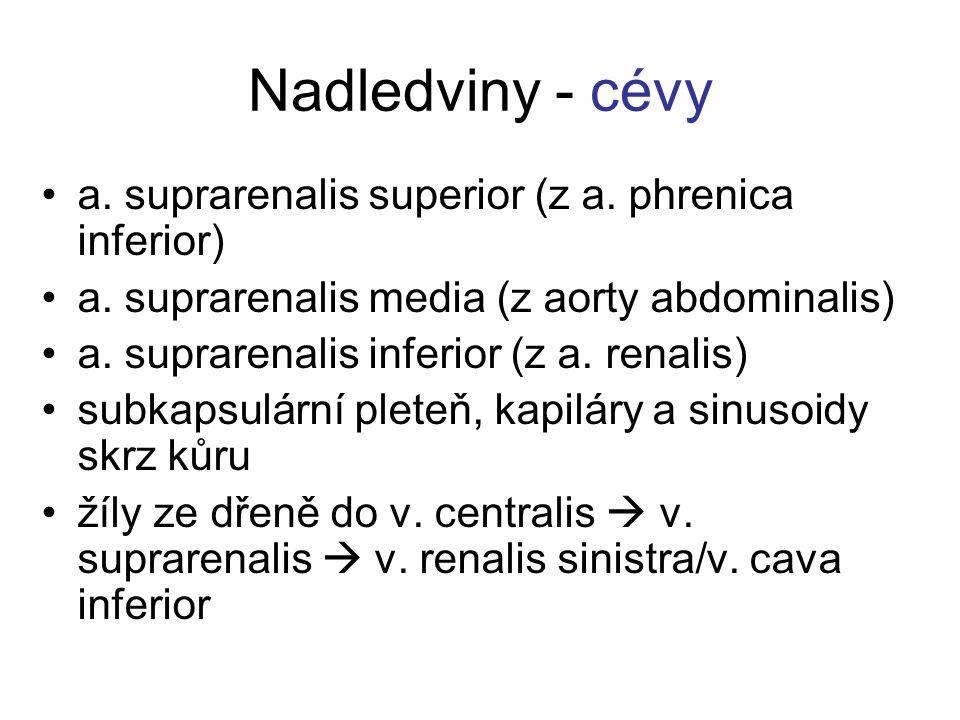 Nadledviny - cévy a. suprarenalis superior (z a. phrenica inferior)