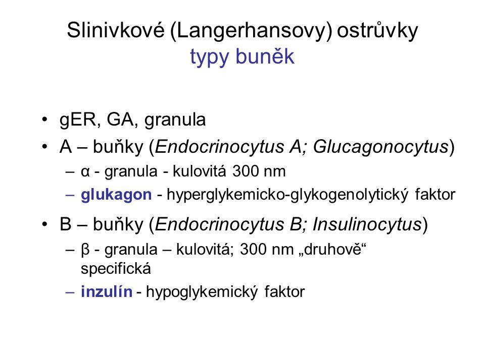 Slinivkové (Langerhansovy) ostrůvky typy buněk