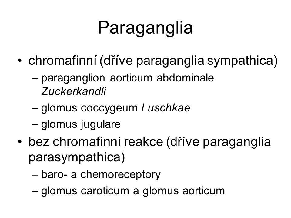 Paraganglia chromafinní (dříve paraganglia sympathica)