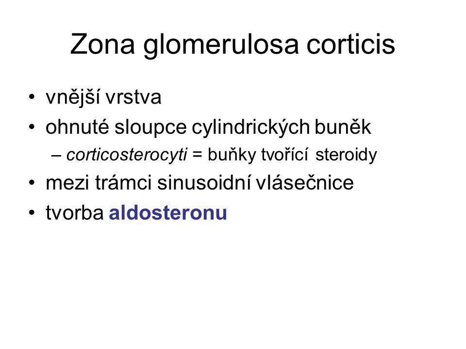 Zona glomerulosa corticis