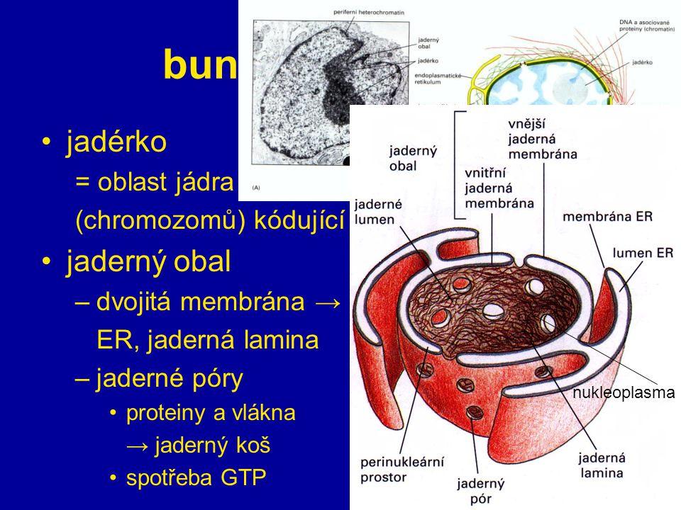 buněčné organely jadérko jaderný obal = oblast jádra