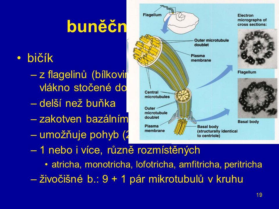 buněčné organely bičík