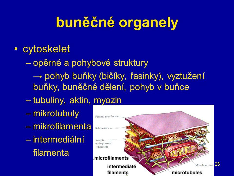 buněčné organely cytoskelet opěrné a pohybové struktury