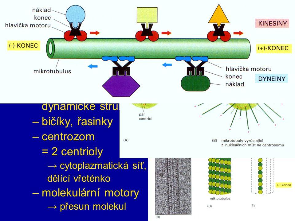cytoskelet mikrotubuly nejtlustší (24 nm) polarizované,