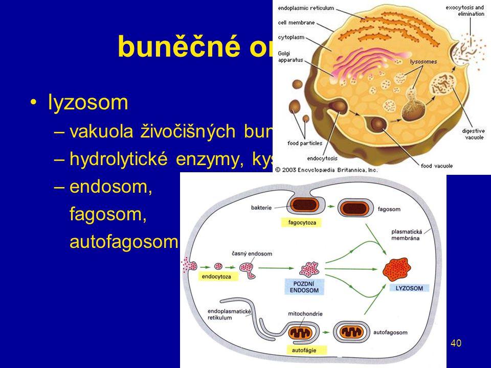 buněčné organely lyzosom vakuola živočišných buněk