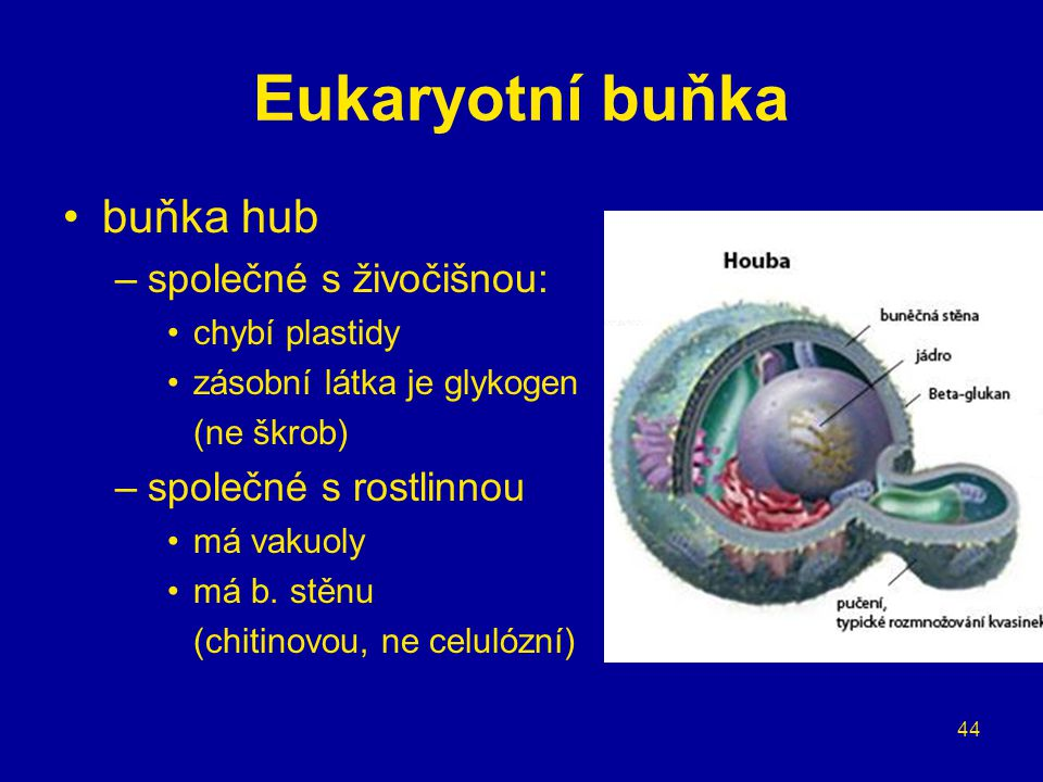 Eukaryotní buňka buňka hub společné s živočišnou:
