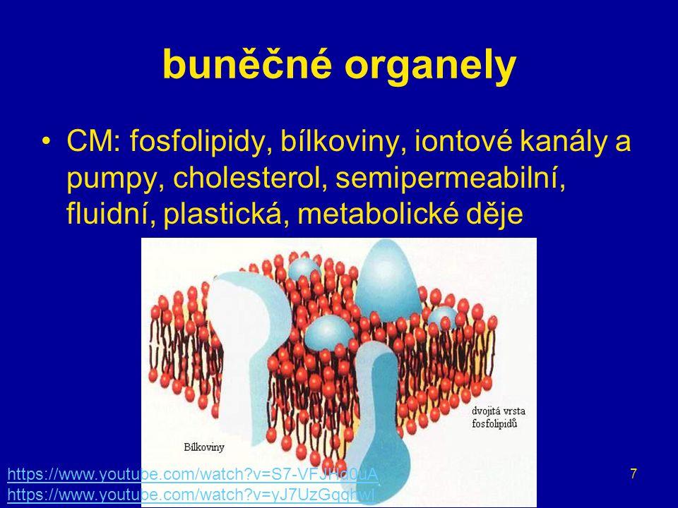 buněčné organely CM: fosfolipidy, bílkoviny, iontové kanály a pumpy, cholesterol, semipermeabilní, fluidní, plastická, metabolické děje.