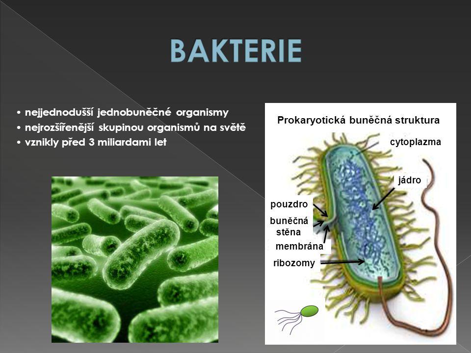 Prokaryotická buněčná struktura