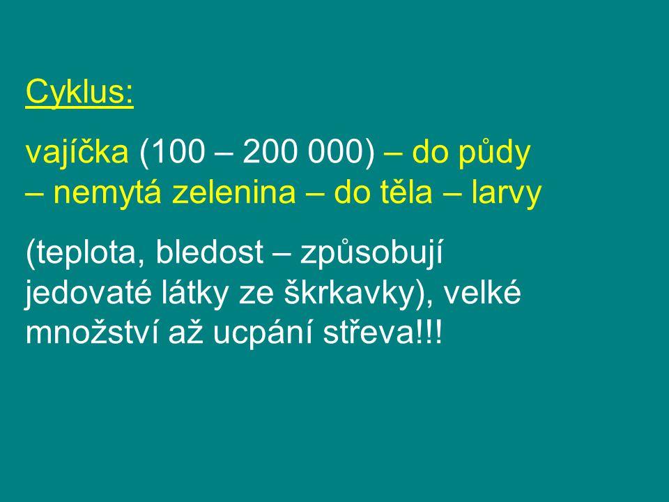 Cyklus: vajíčka (100 – 200 000) – do půdy – nemytá zelenina – do těla – larvy.