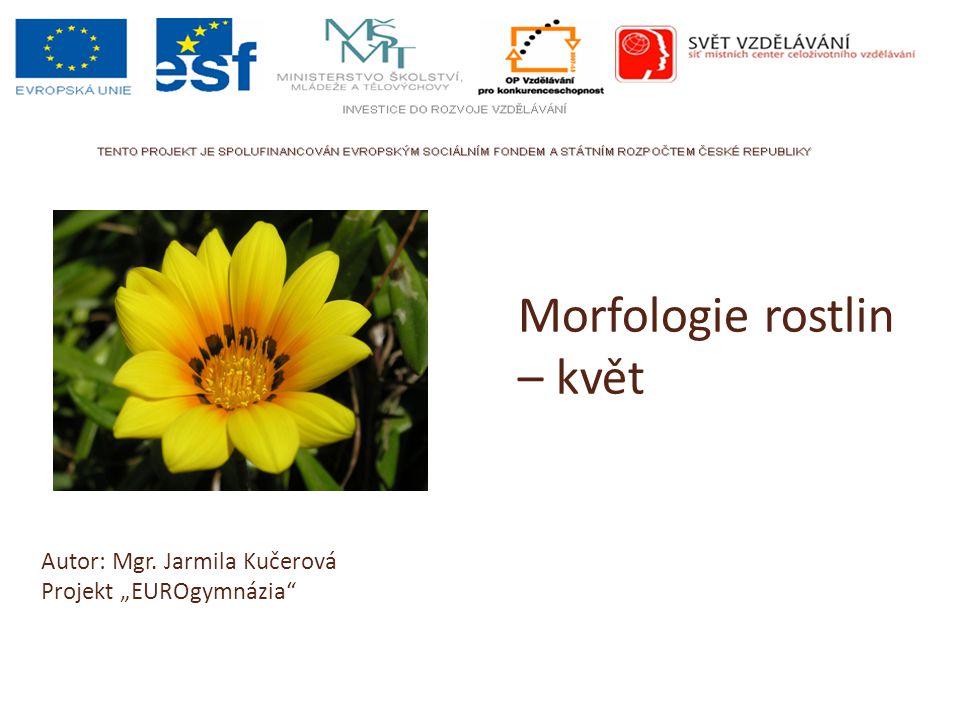 Morfologie rostlin – květ