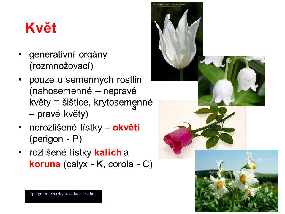 Květ generativní orgány (rozmnožovací)
