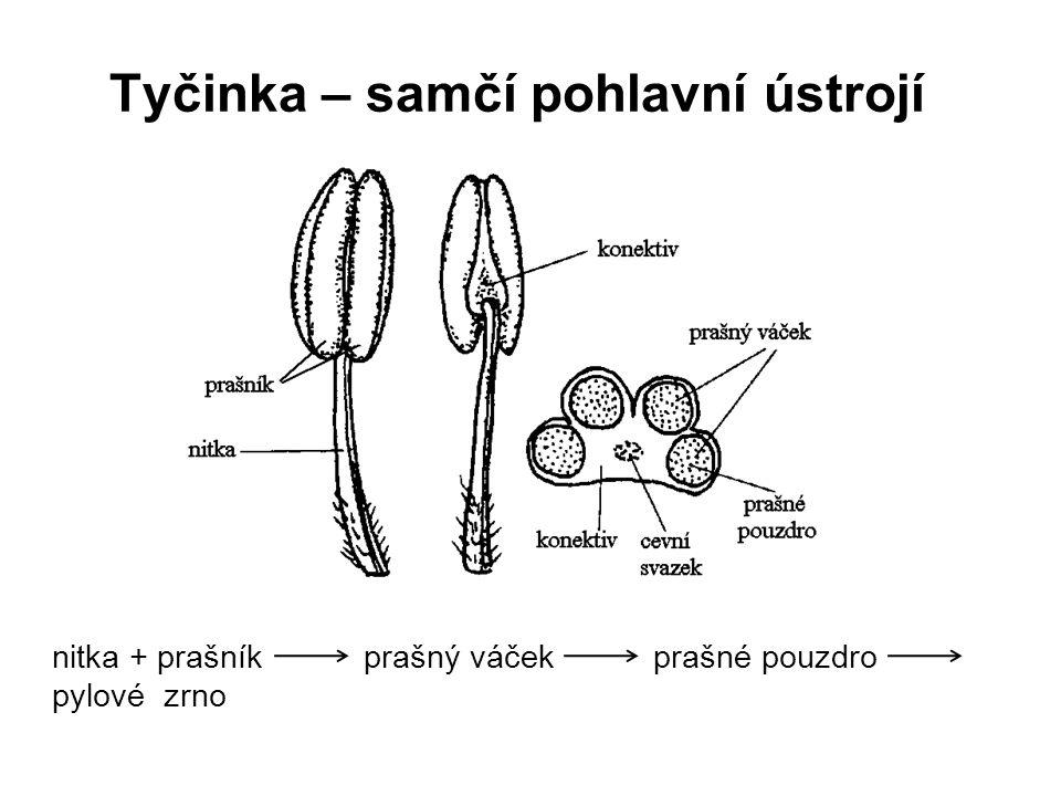 Tyčinka – samčí pohlavní ústrojí