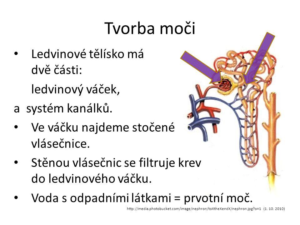 Tvorba moči Ledvinové tělísko má dvě části: ledvinový váček,