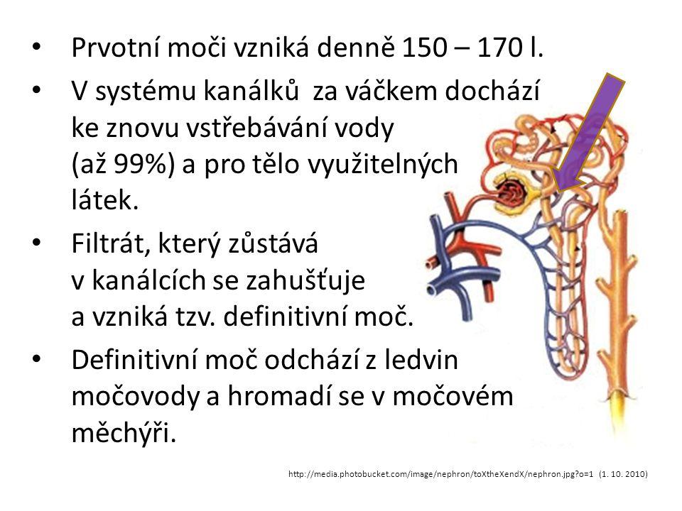 Prvotní moči vzniká denně 150 – 170 l.