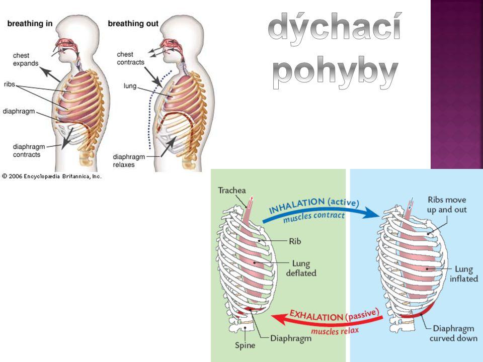 dýchací pohyby