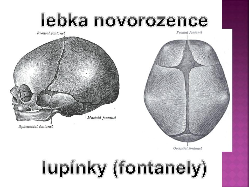 lebka novorozence lupínky (fontanely)