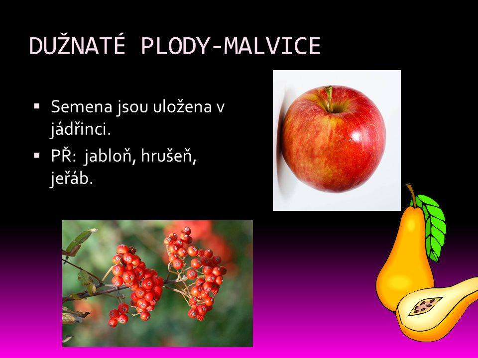 DUŽNATÉ PLODY-MALVICE
