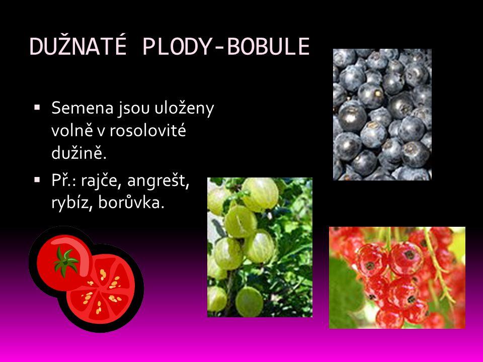 DUŽNATÉ PLODY-BOBULE Semena jsou uloženy volně v rosolovité dužině.