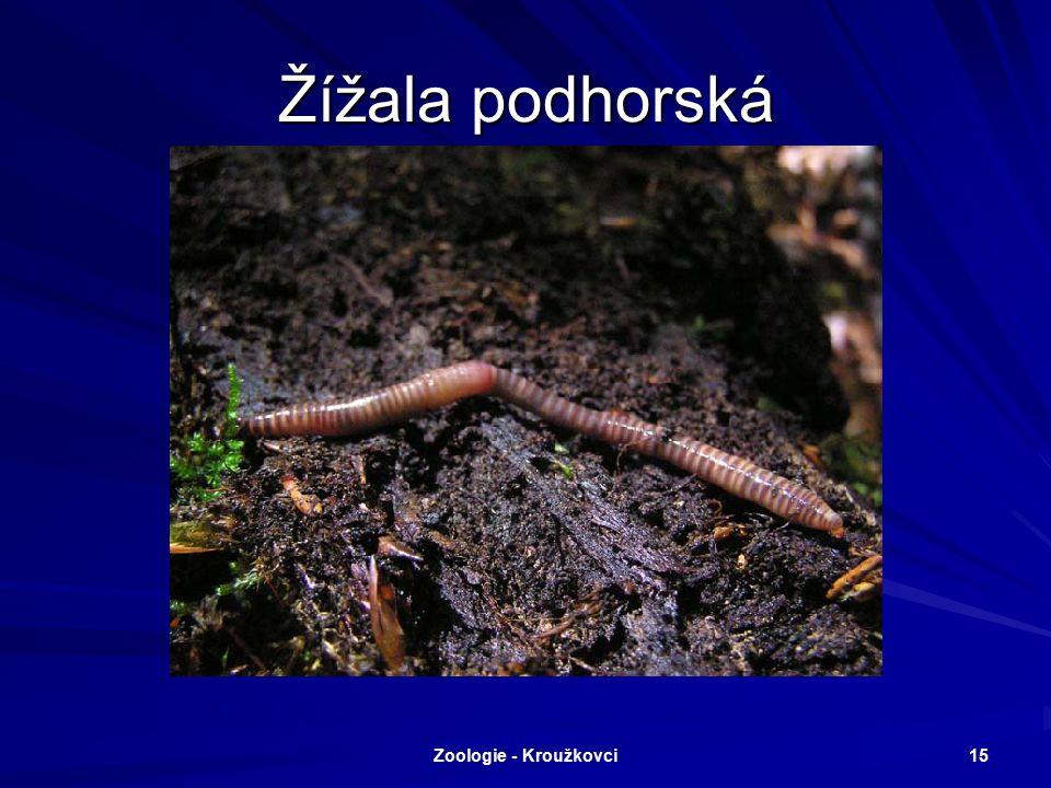 Žížala podhorská Zoologie - Kroužkovci