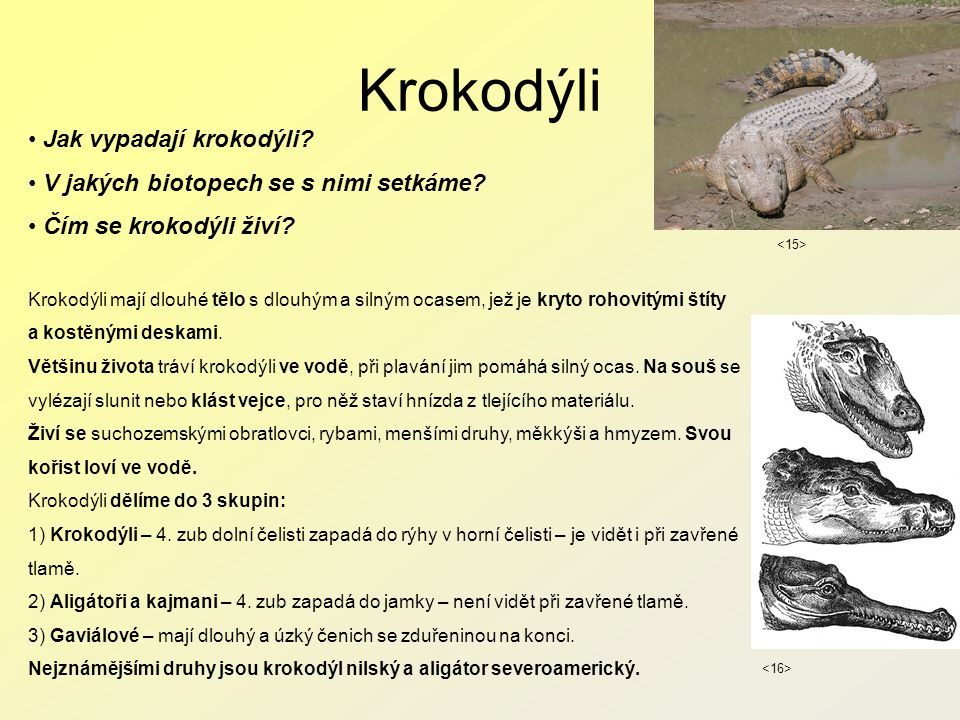 Krokodýli Jak vypadají krokodýli