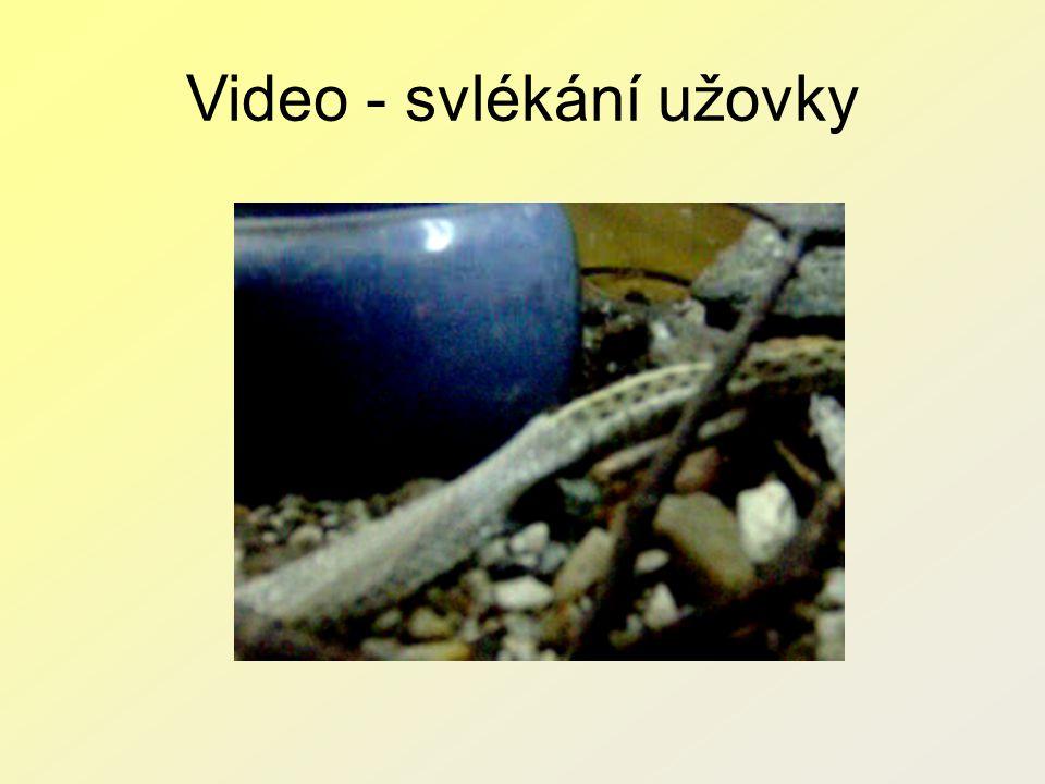Video - svlékání užovky