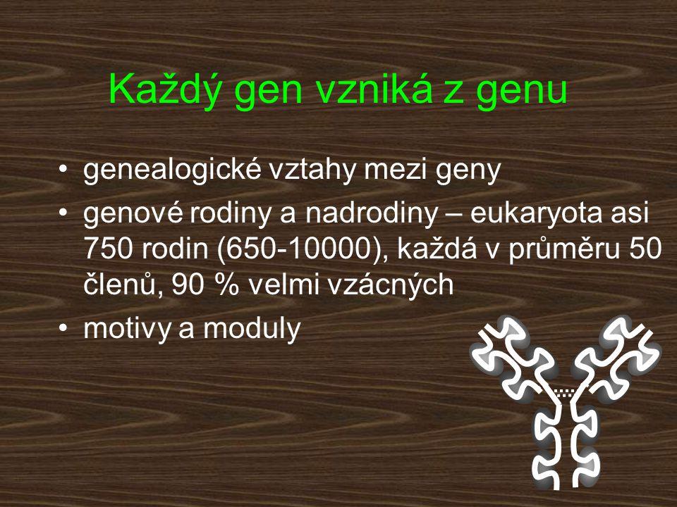Každý gen vzniká z genu genealogické vztahy mezi geny