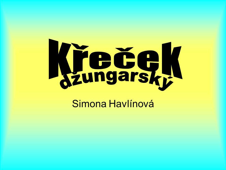 Křeček džungarský Simona Havlínová