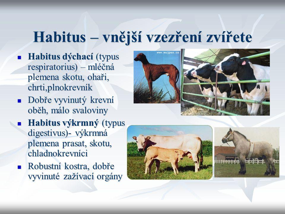 Habitus – vnější vzezření zvířete
